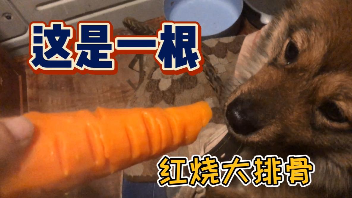 小土狗好几天没吃顿好的,给它煮根胡萝卜,当成排骨舔的精光