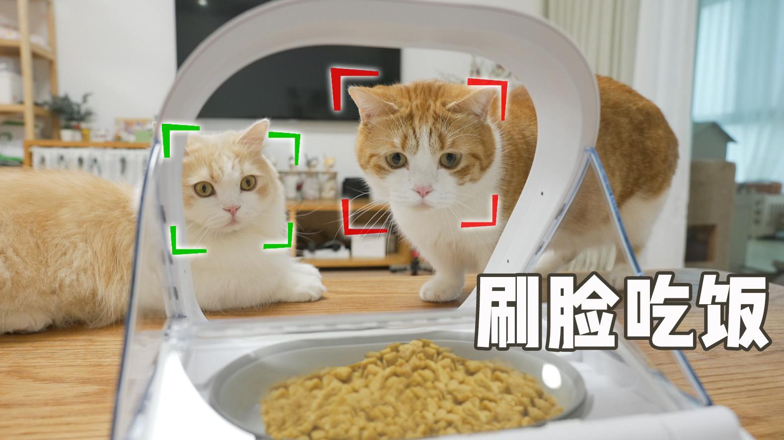 猫脸识别喂食器,猫:以我的颜值...哎!你别关呀