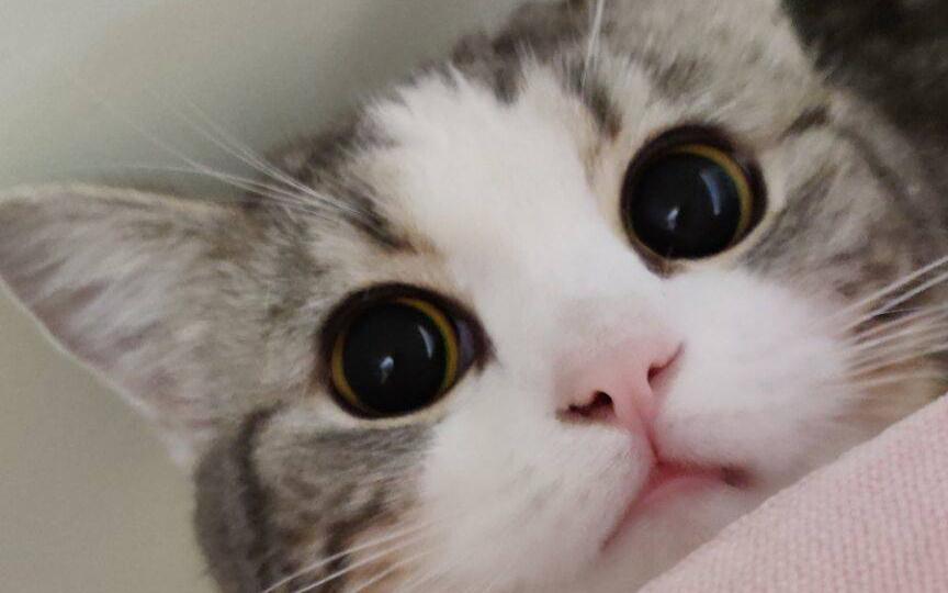 【子中中】好猫都是别人家的!
