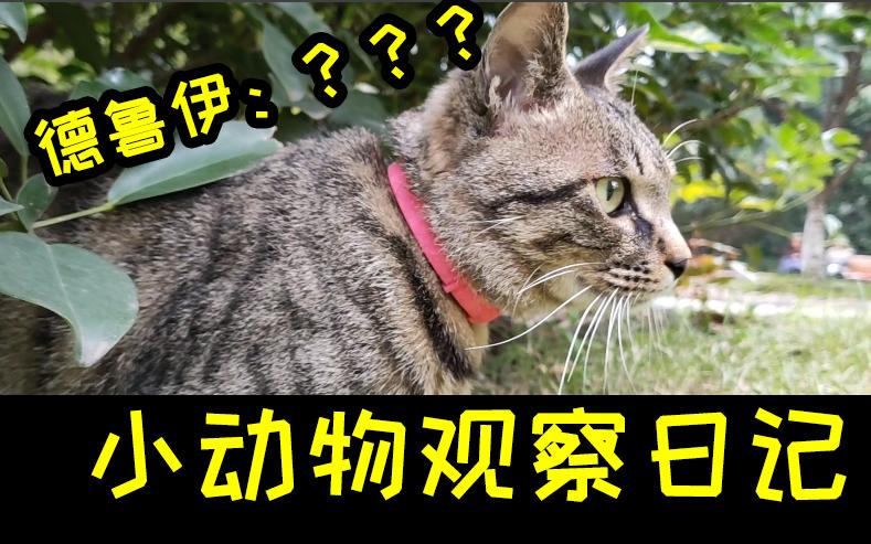【猫物语】这就是猫咪的视角吧?