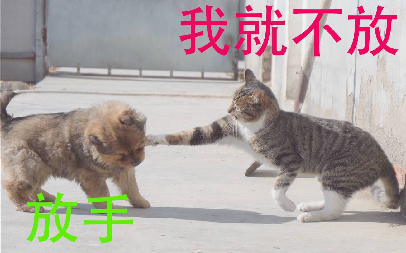 胖狗与猫这样的高手过招,招招都是笑点绝学。