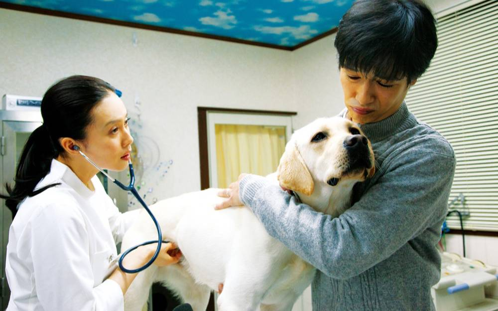 """【独家】【何止电影】这种""""人狗""""电影,我的眼泪永远无法抵抗《向日葵与幼犬的7天》"""