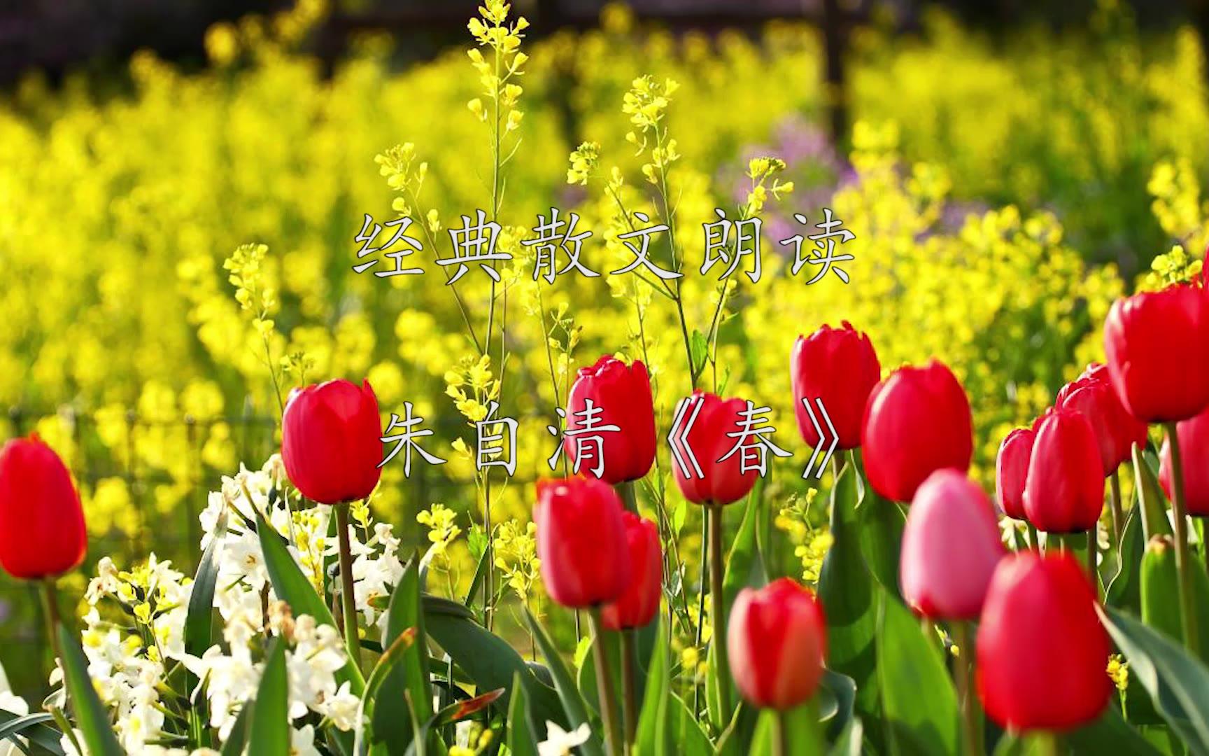 【老司马】经典散文朗诵朱自清《春》