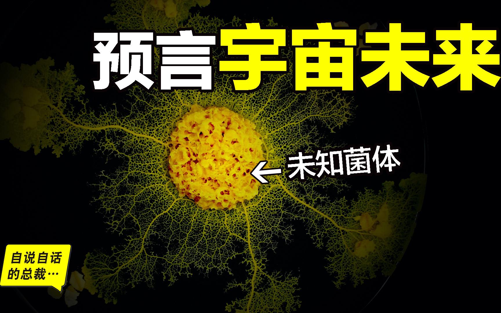 未知菌体:单细胞生物预言,结构像大脑和宇宙,高维宇宙的投影?