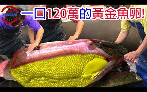 【生物放大鏡】吃一口讓你破產的黃金魚卵 耗時100年才能取得的稀有魚卵 世界上最貴的食物