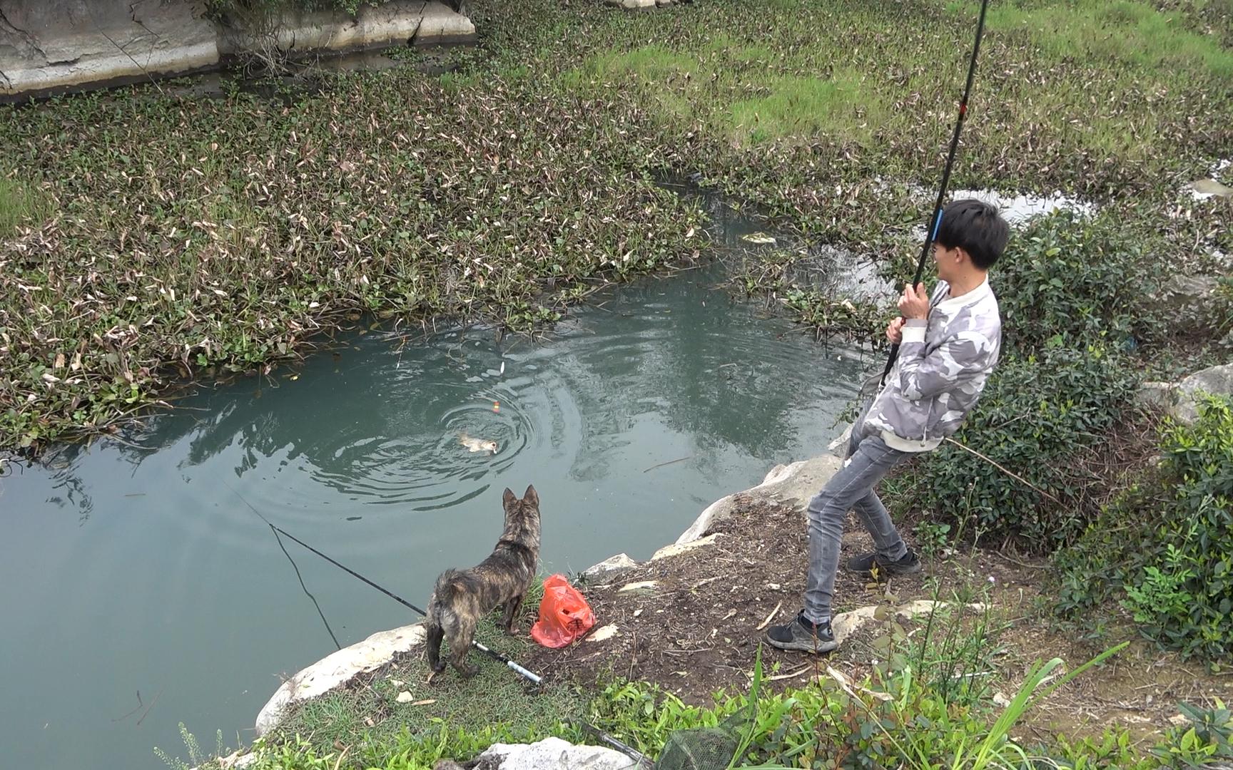 野钓:浓密的水葫芦下真藏鱼,大货不停上钩,鱼口太猛了