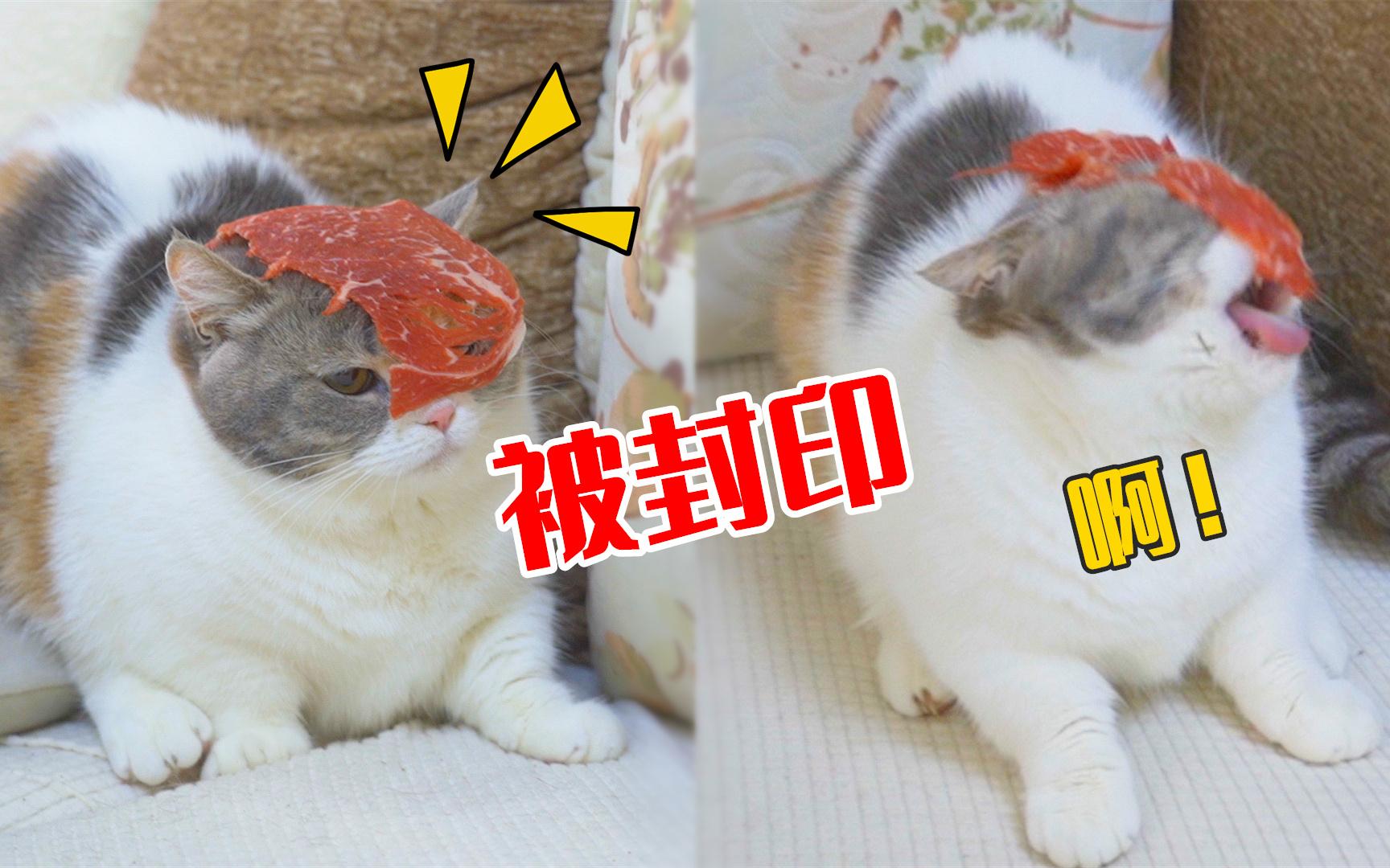 突然把牛肉扔猫脸上,猫会什么反应?猫:封印住了!