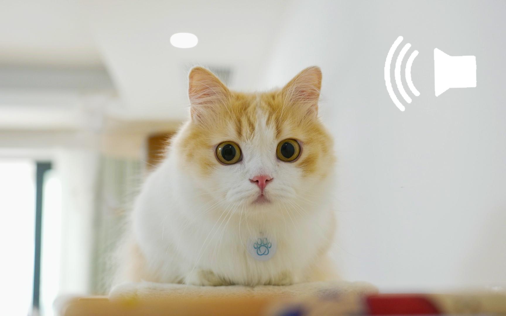 全世界最火的3个猫咪音频,我后悔给俺家猫听了!