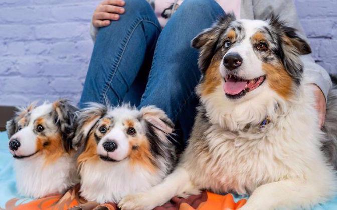 【基德】如果你的宠物去世了,你愿意用克隆技术复活它吗?