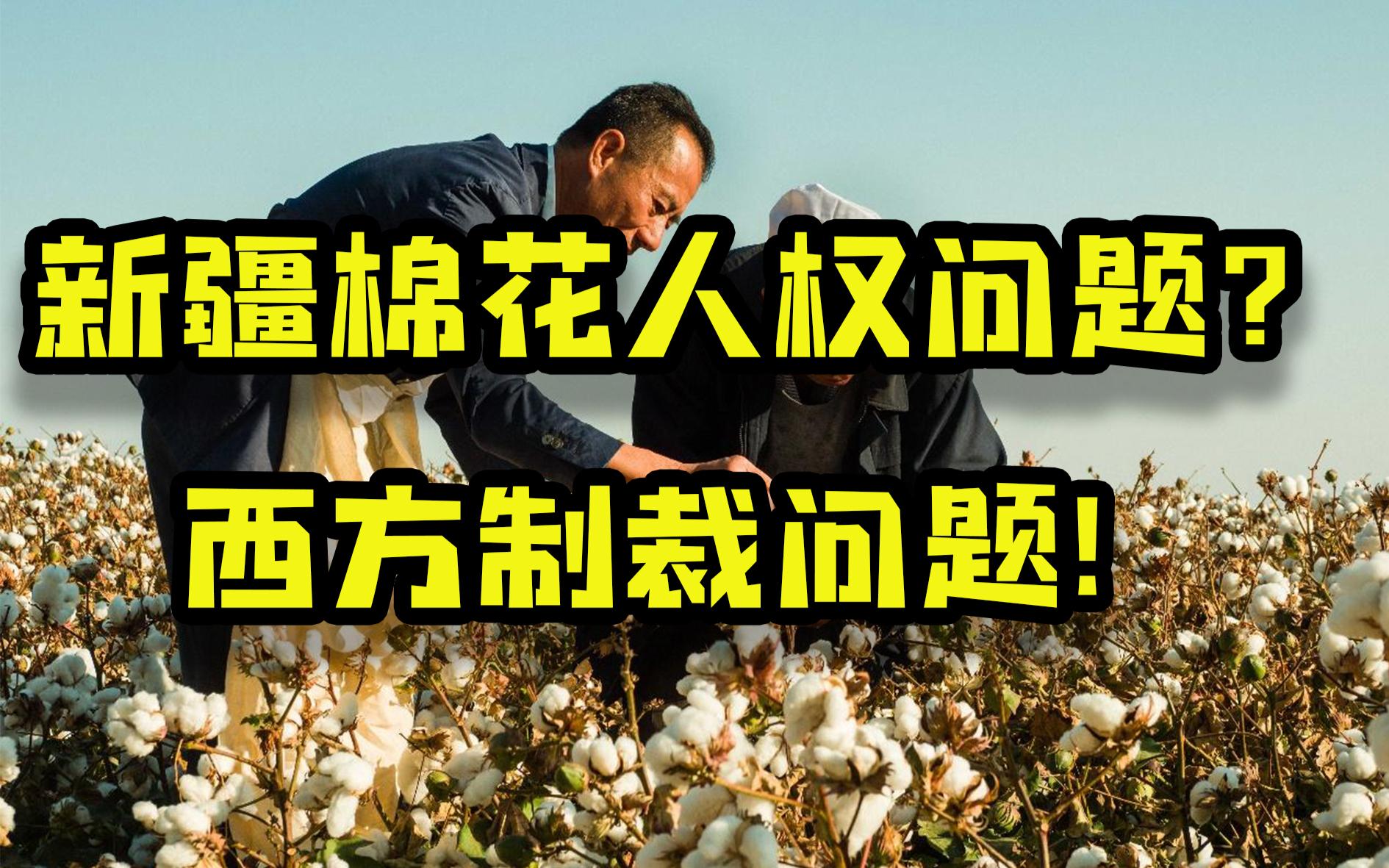 制裁新疆棉花是为了人权?可拉倒吧![茴香馅胡扯]