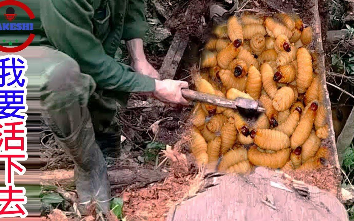 數個在野外生存你必須吞下的生物 世界最強打野貝爺的無情進食實況 你敢吃幾種