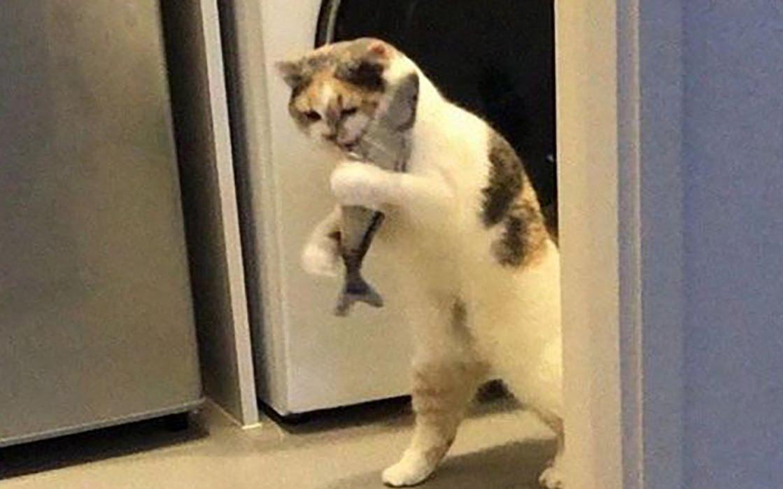 令人迷惑的猫咪生活