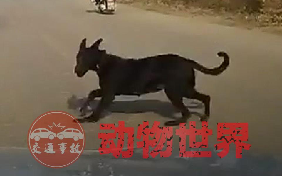 交通事故:动物世界2021(三)