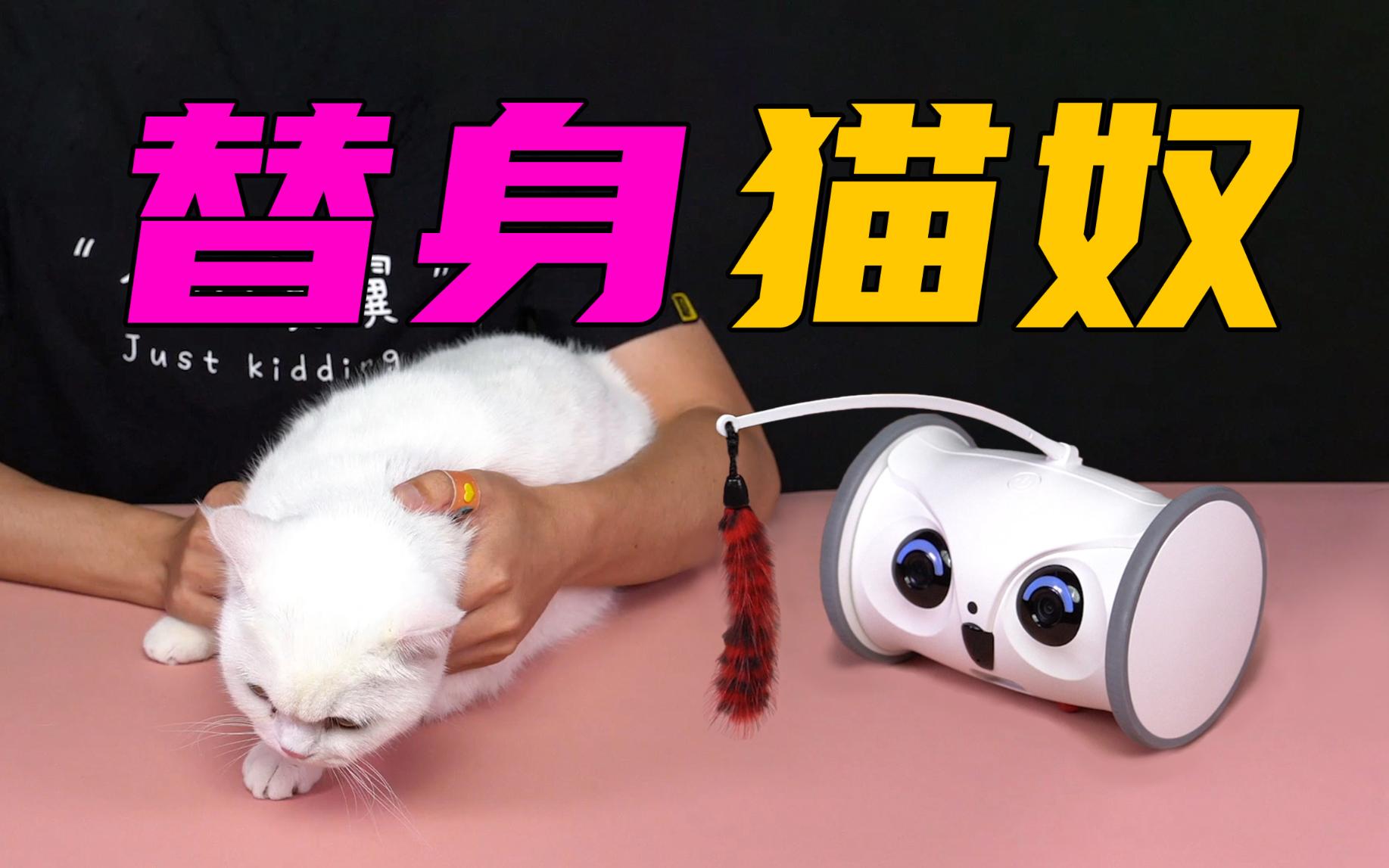 【无聊的开箱】智能替身猫奴机器人?这下去电子厂打工不用担心宠物没人陪了