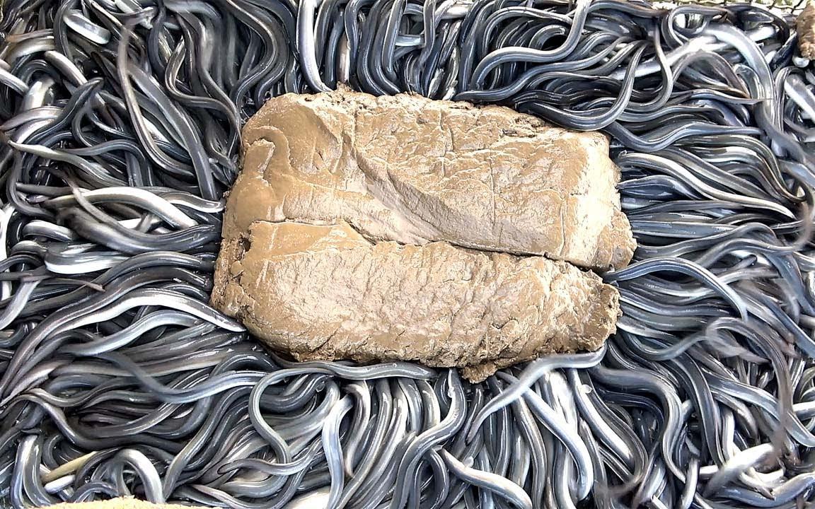 惊奇的馒鱼喂食秀 鳗鱼切割技能与料理 - 台湾云林口湖美食