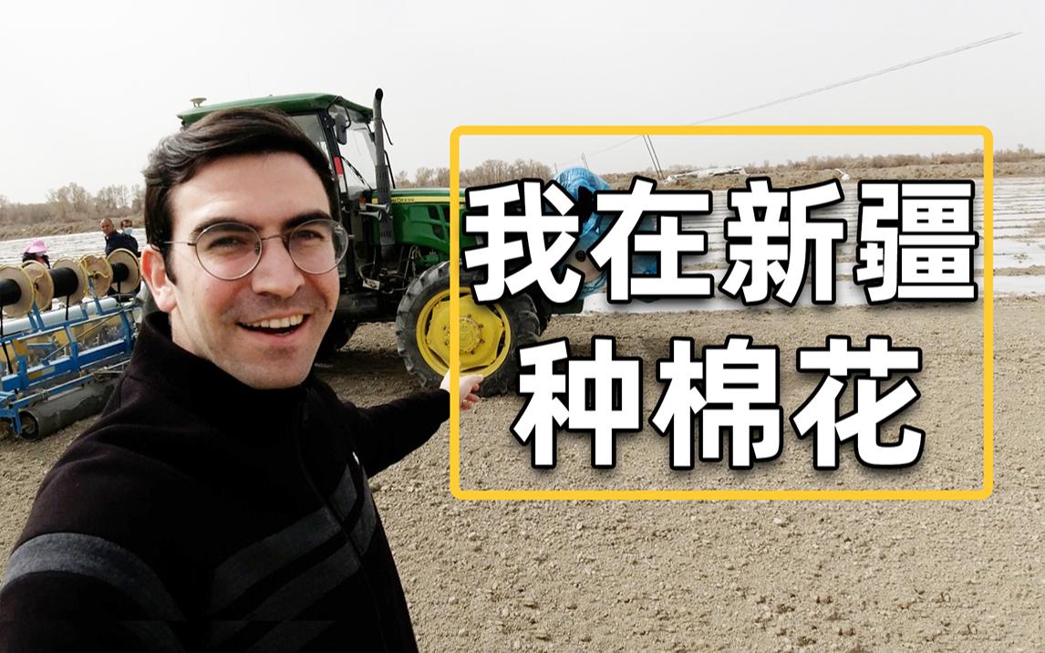 和新疆老乡一起种棉花,我遭遇了什么?