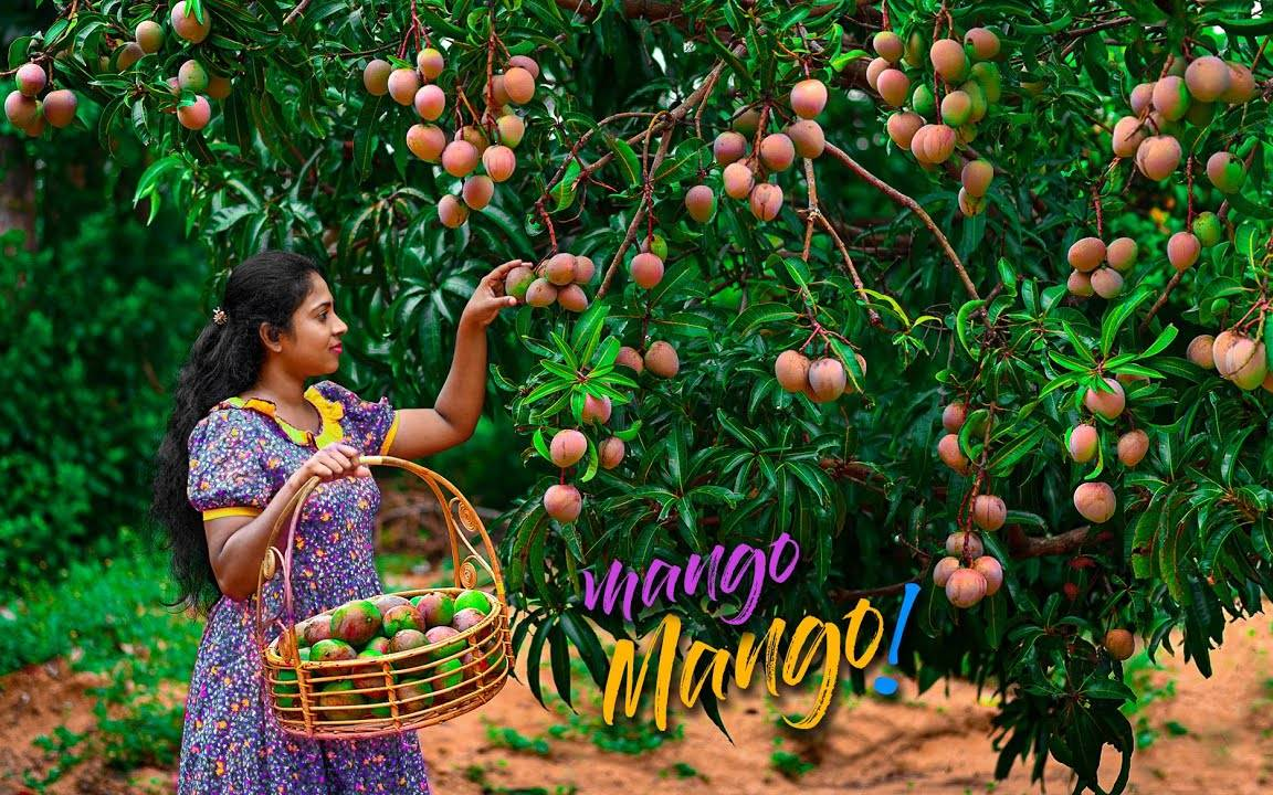 乡村女孩正在制作甜芒果甜点和辣咖喱