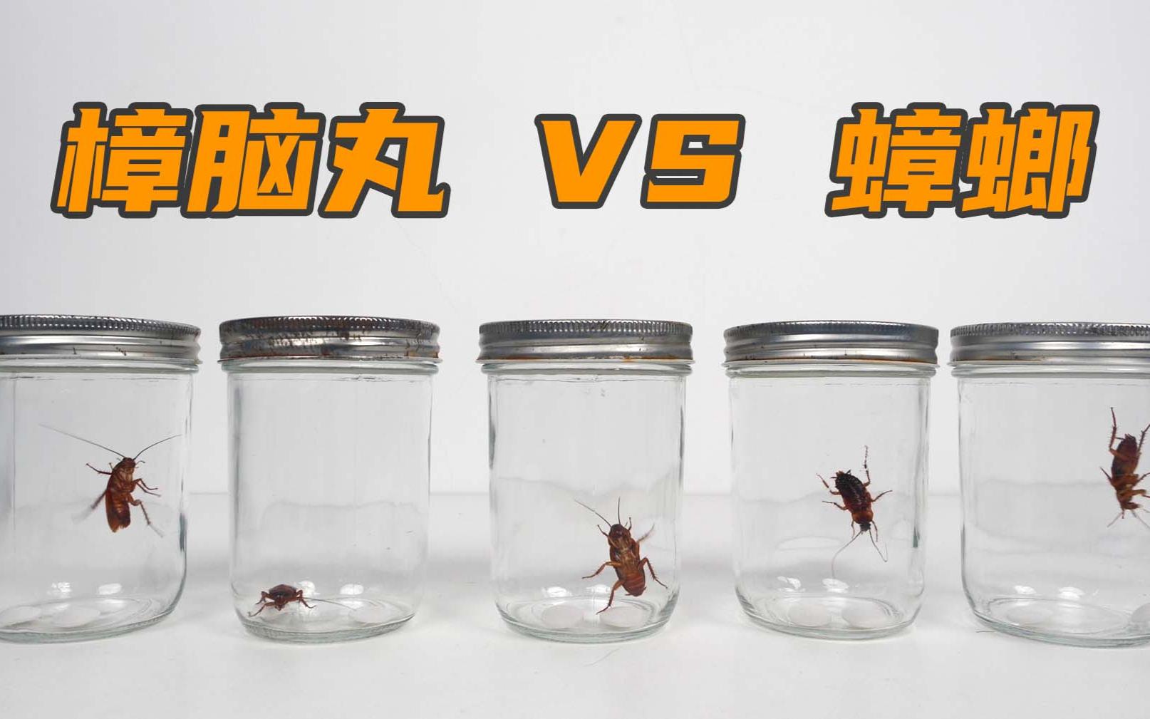 实验:樟脑丸可以杀死蟑螂吗?