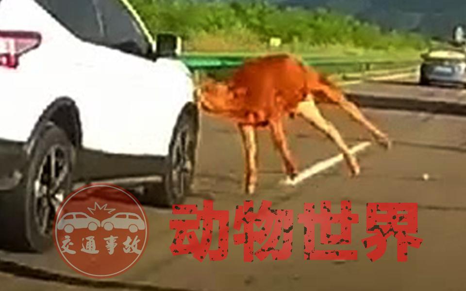 交通事故:动物世界2021(四)