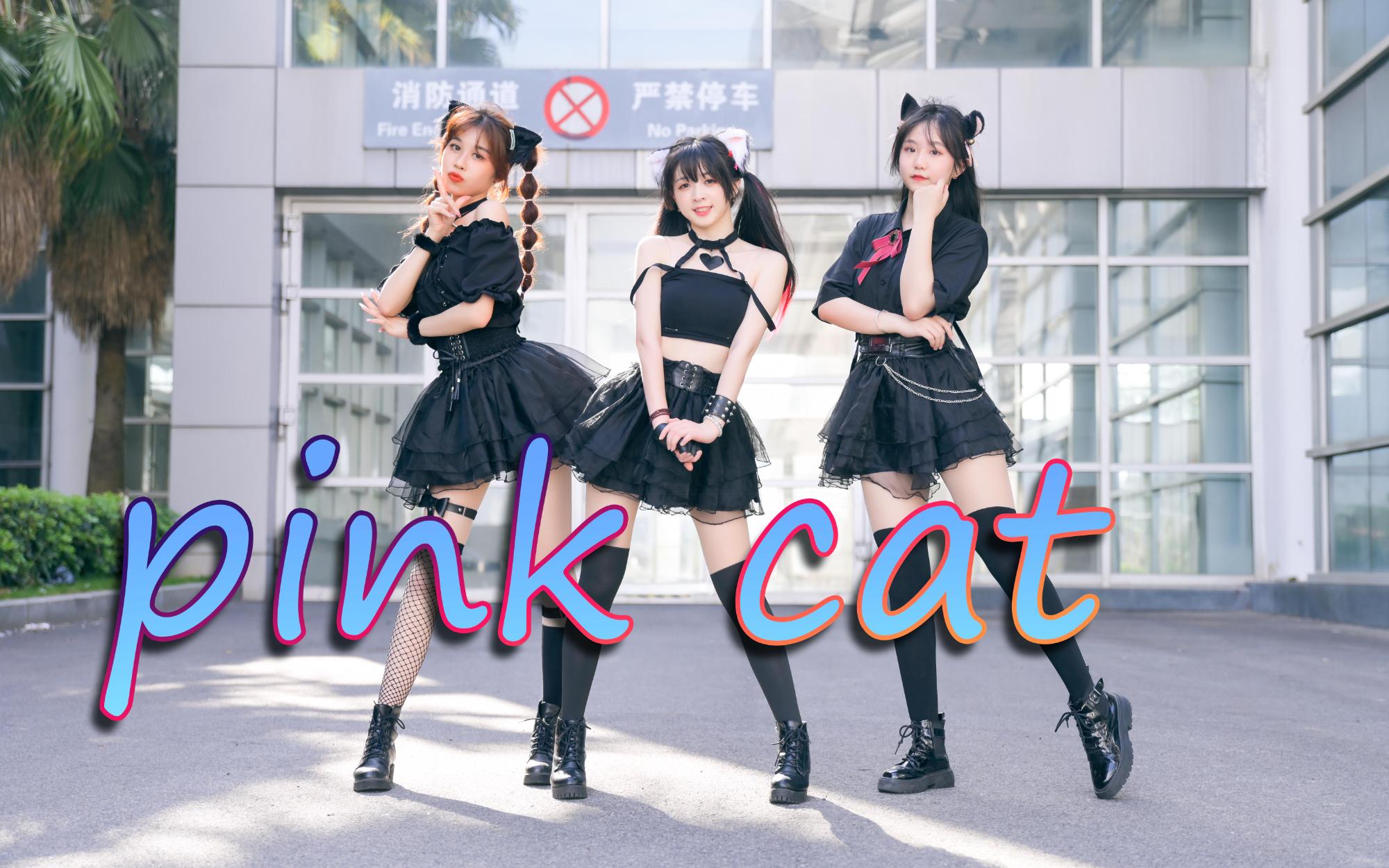 【卿斗×棠樱×雨柒】pink cat快看!这里有三只大胆的猫咪正在向你发起爱的攻势(☆▽☆)
