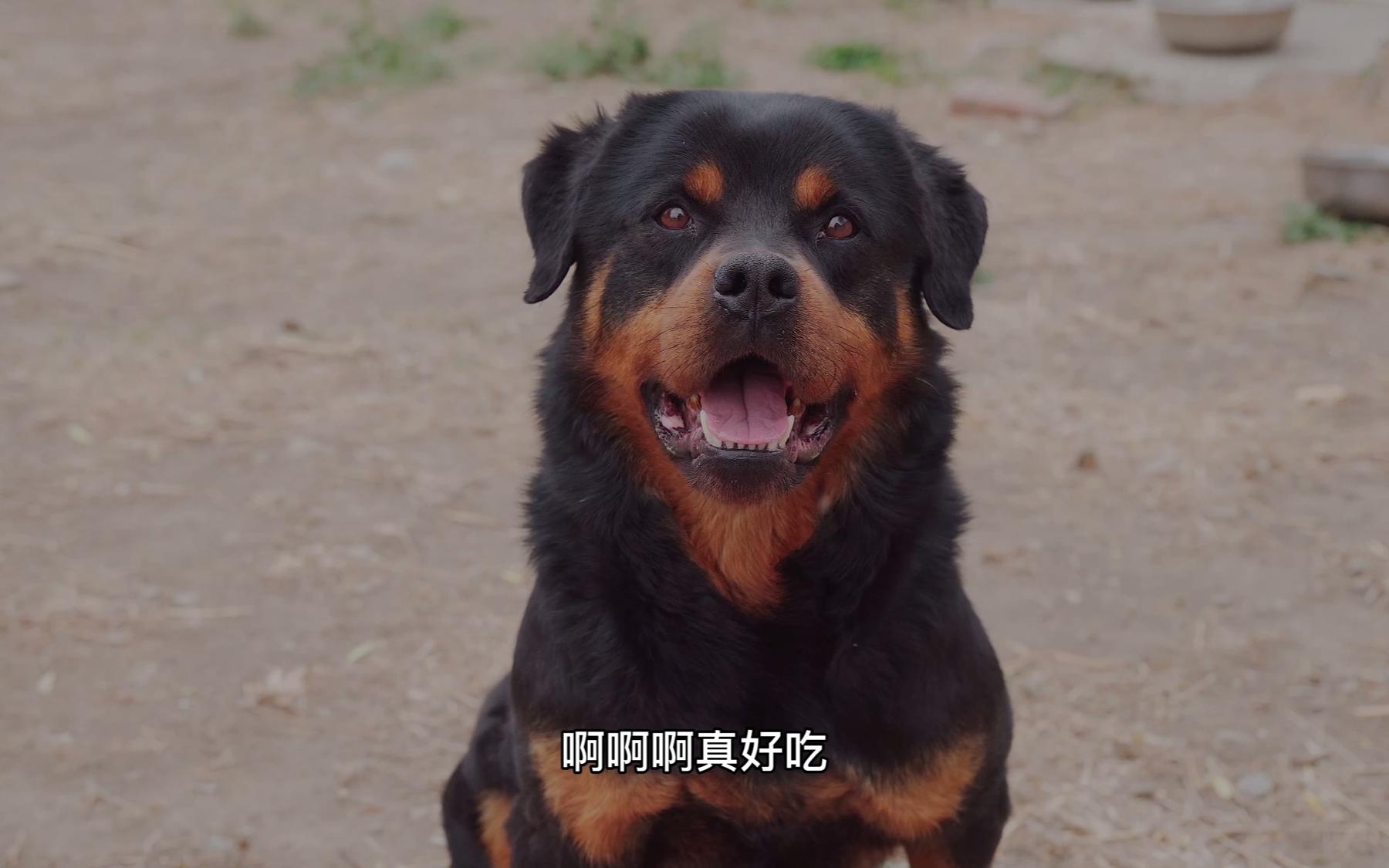 再见了太郎和涛涛,祝你在新的家庭里快乐成长。