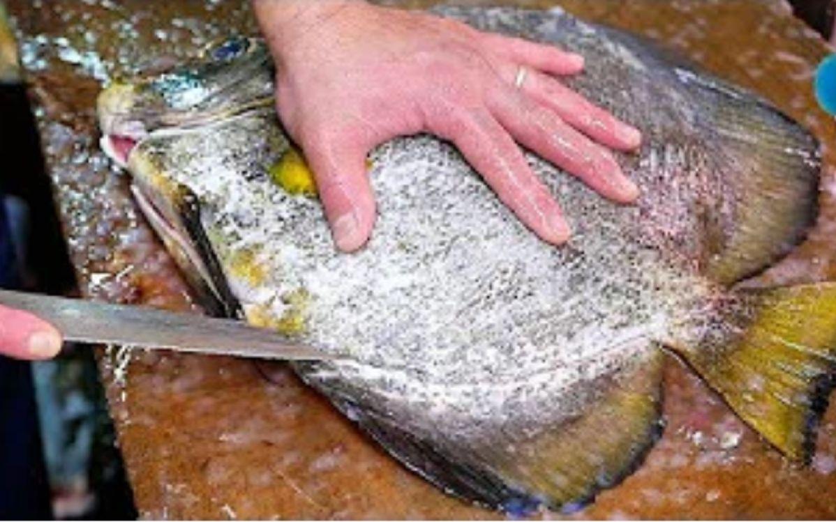 日本蝙蝠鱼做的炸鱼排,搭配灵魂酱汁好吃得停不下来
