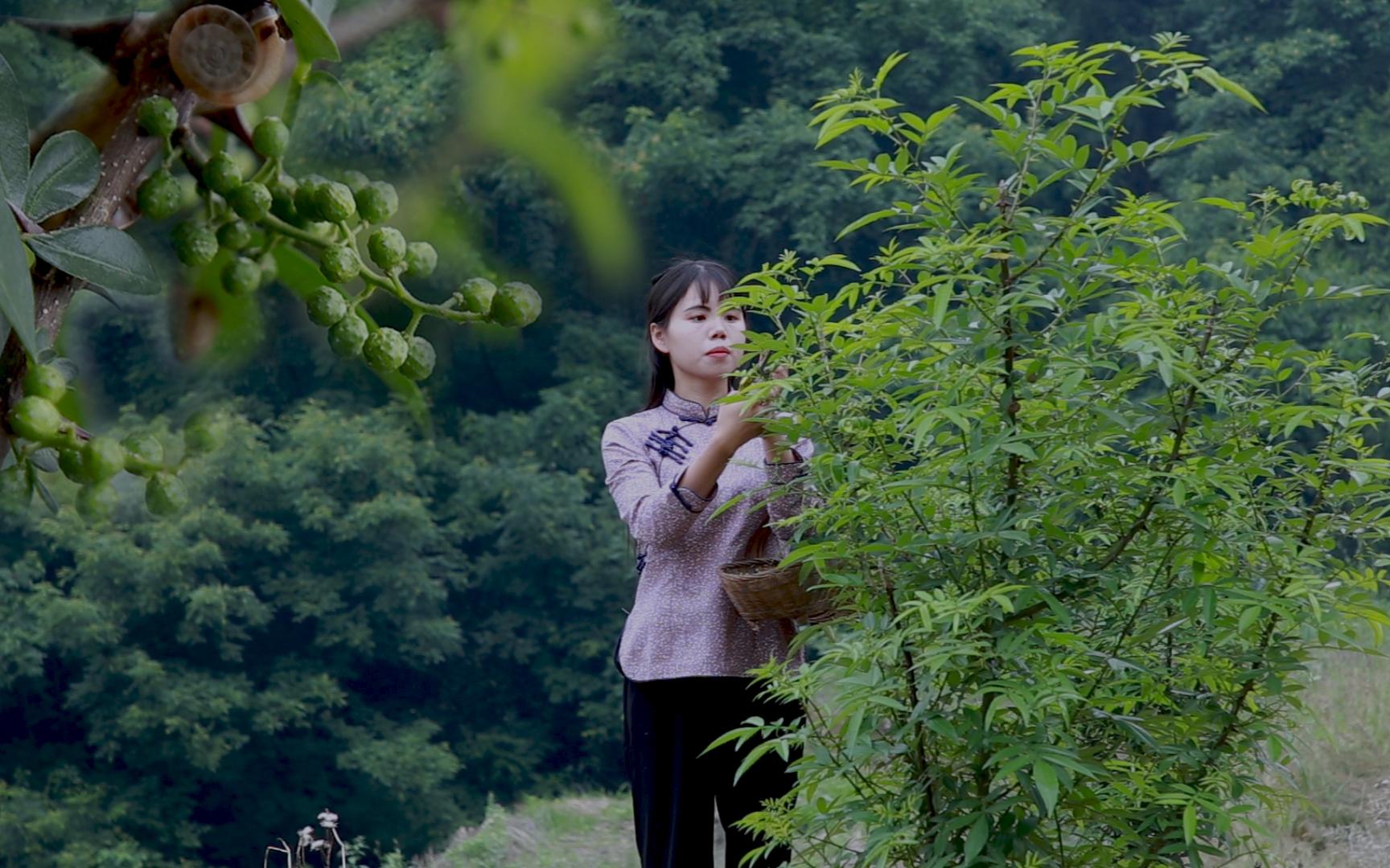 川菜的灵魂,神奇的调味料--藤椒
