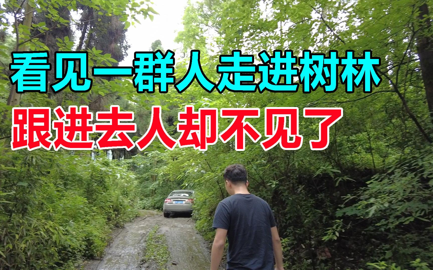 自驾来到都江堰,好多人走进景区旁的树林,我们跟进去人却不见了