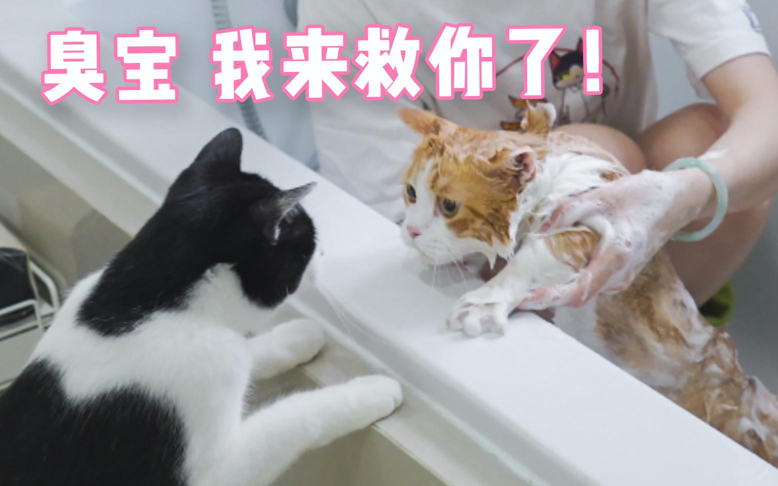 """""""猫片是用来治愈的,不是让你拿来杀狗!""""一位云吸猫人士满意地说。"""