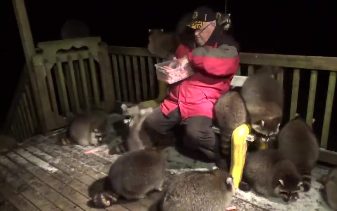 老爷爷喂野生浣熊,被一大群干脆面包围