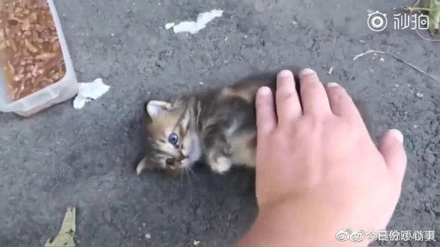 国外小哥哥路上遇见一只超凶的流浪小奶猫...