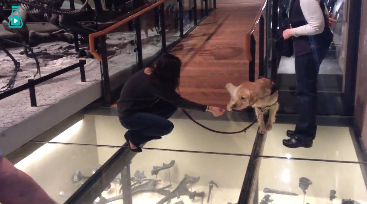 第一次走到玻璃上的狗子...