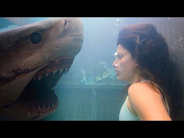 变种鲨鱼猎杀人类,居然还能听懂人话,在这部惊悚片越看越恐怖