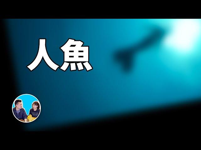 怕海的人不要看,真實的美人魚 | 老高與小茉 mr & mrs gao