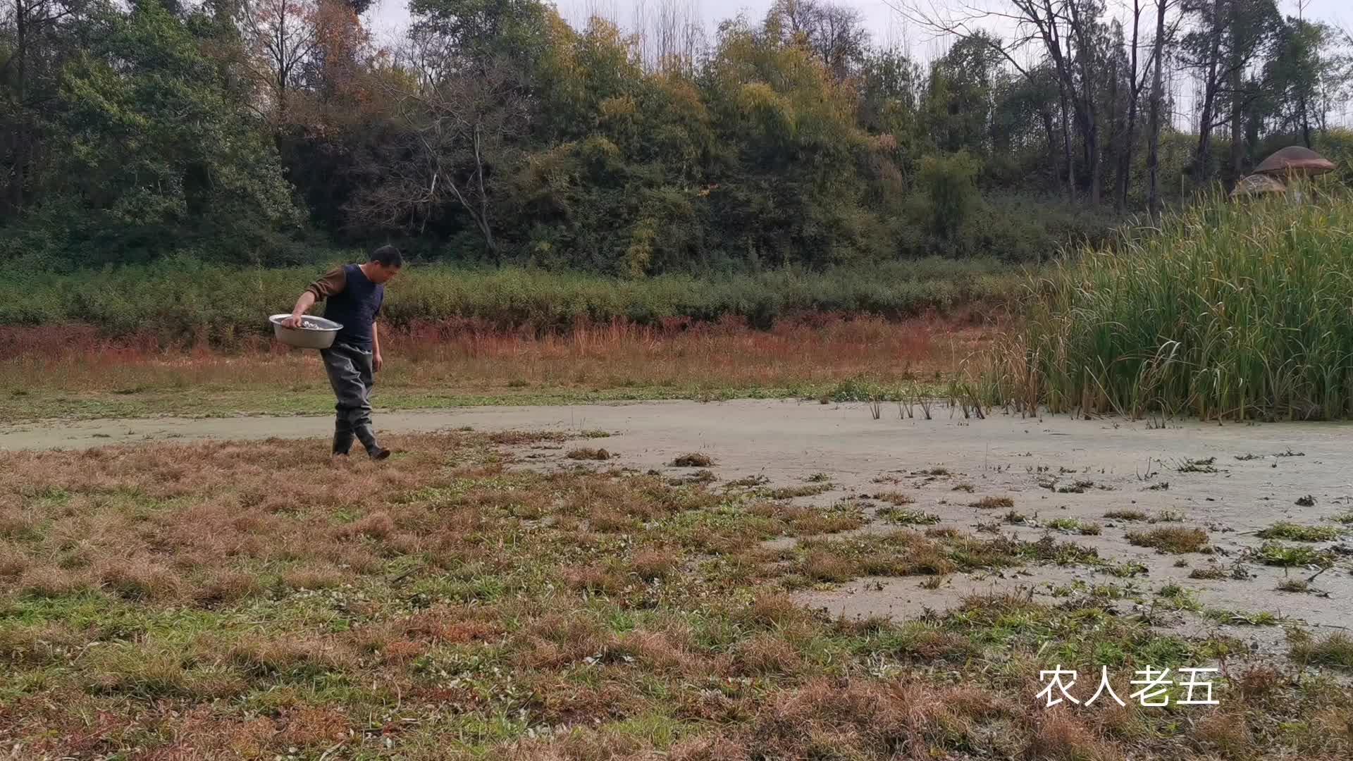 荒废的鱼塘发现一个洞, 把3瓶啤酒灌下去, 野货抓了一条又一条
